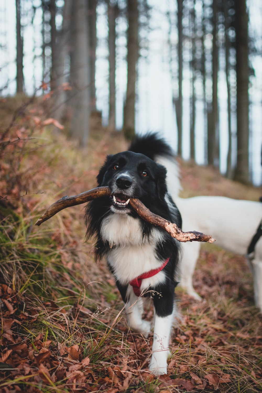 dog biting a stick beside another dog