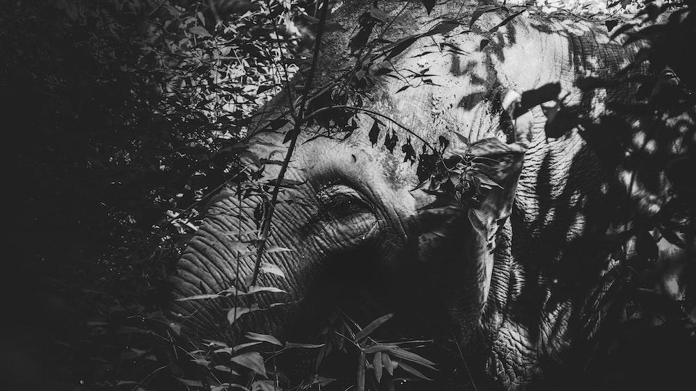 elephant by tree