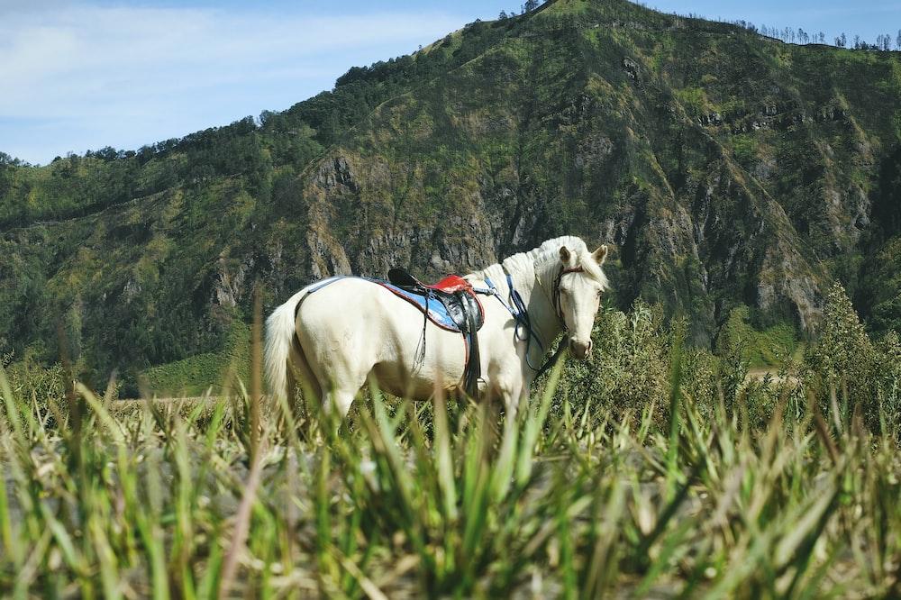 white horse on green grass