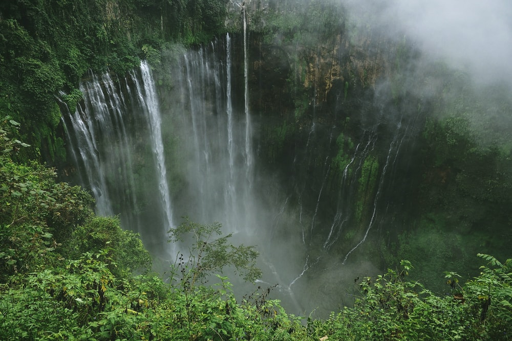 cascading waterfalls in green plant covered ravine