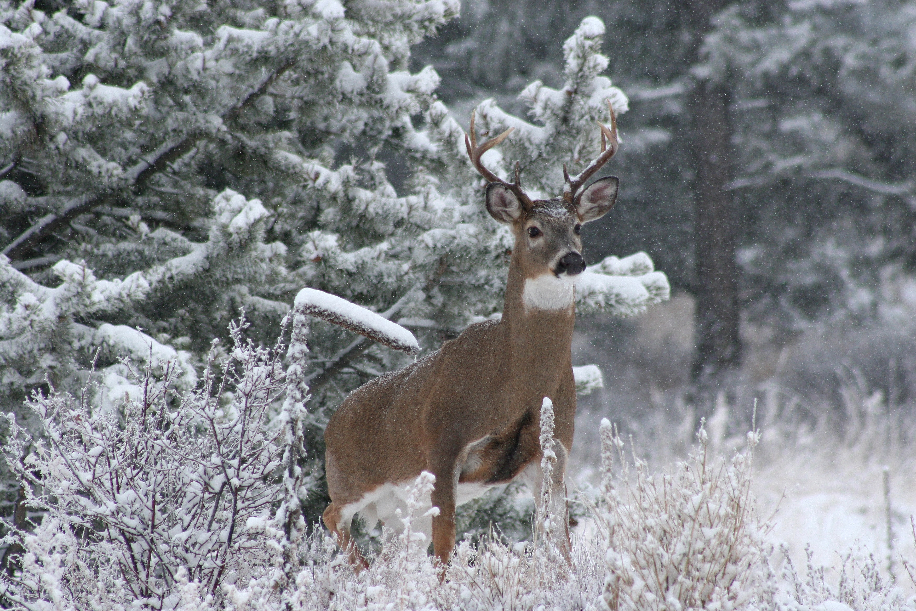 brown deer on forest