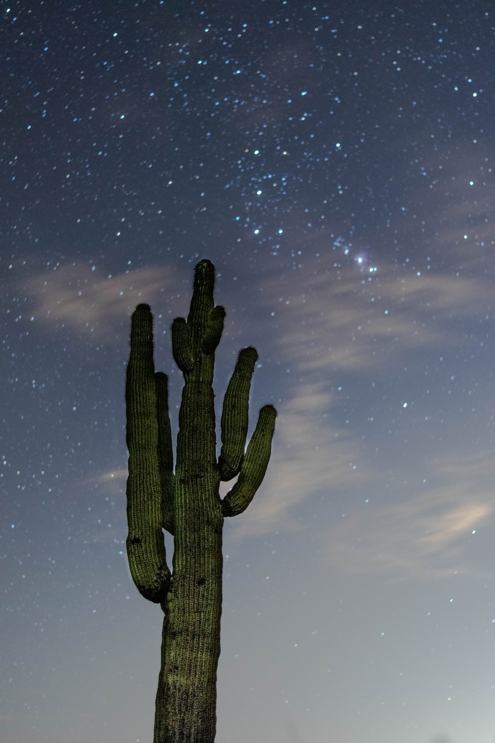low angle photography of green cactus