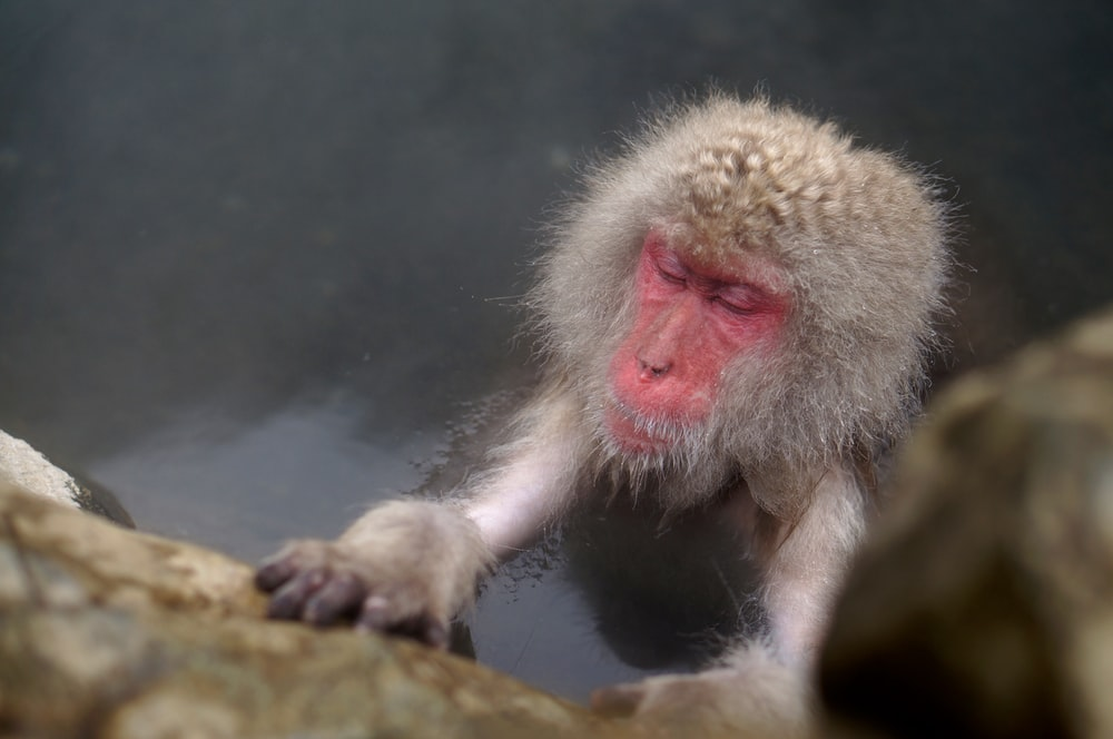 brown primate on body of water