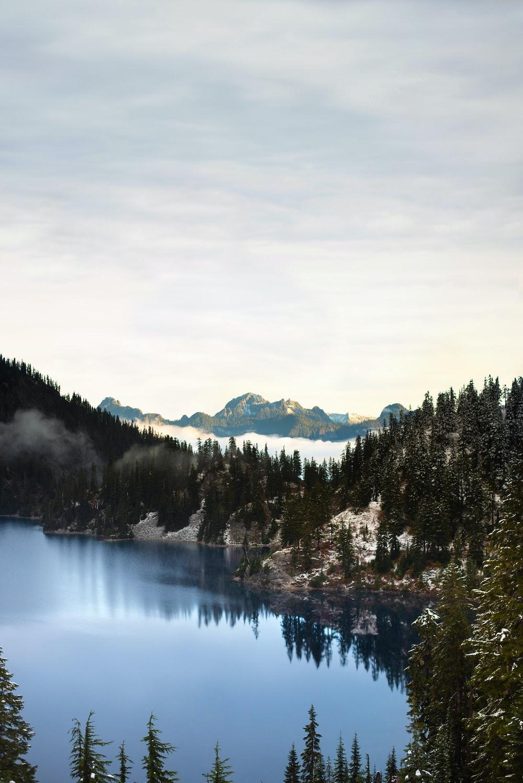 body of water beside green pine trees