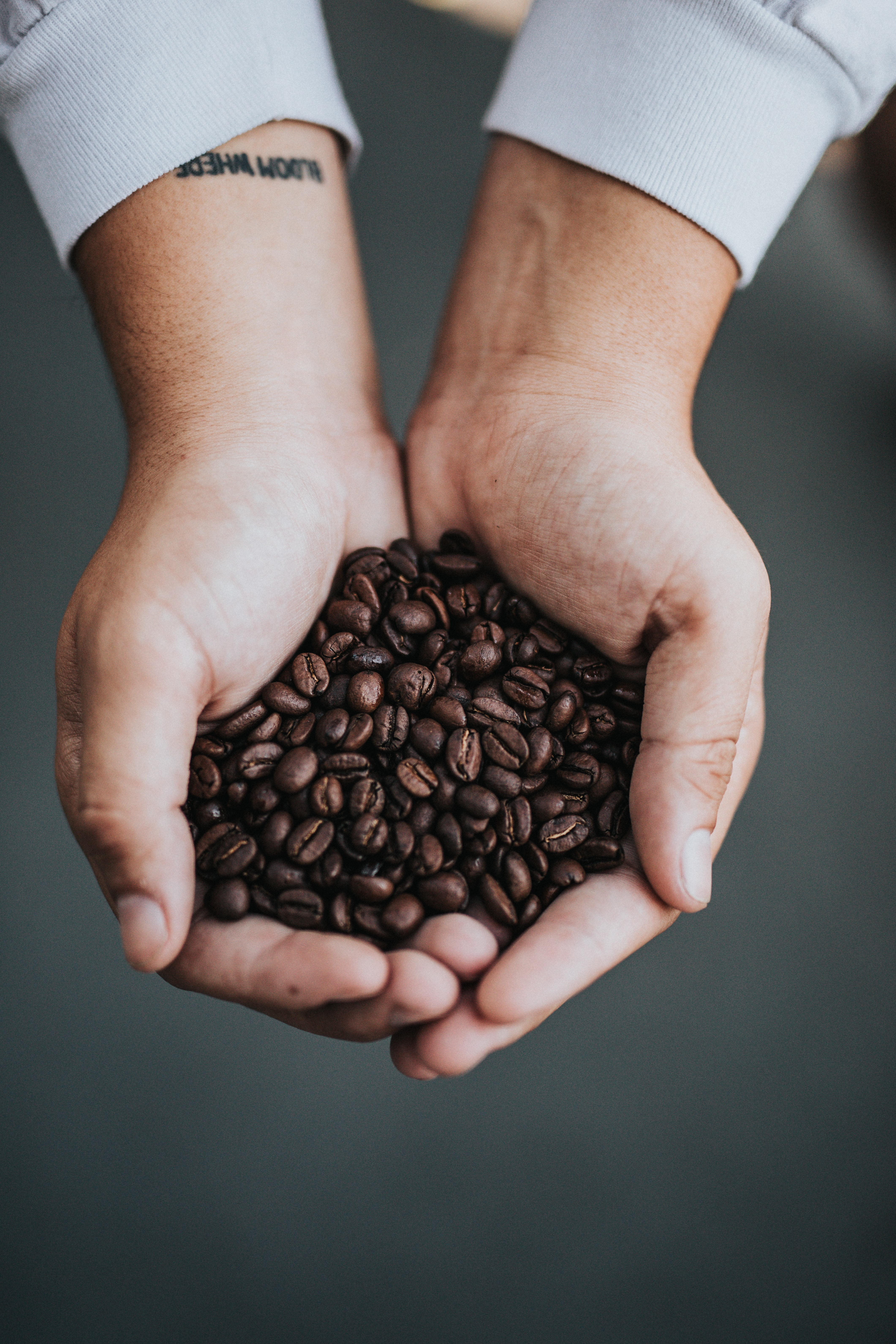 person holding pile of coffee beans