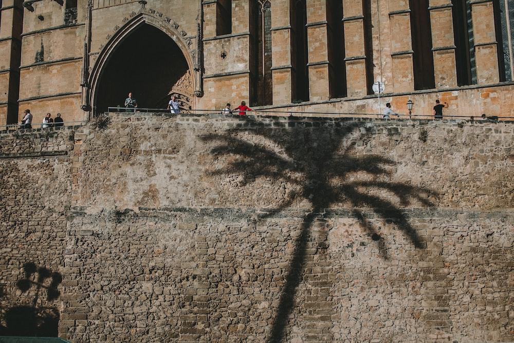 shadow of palm tree on grey brick wall