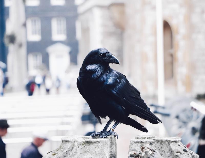 black crow on gray stone photo
