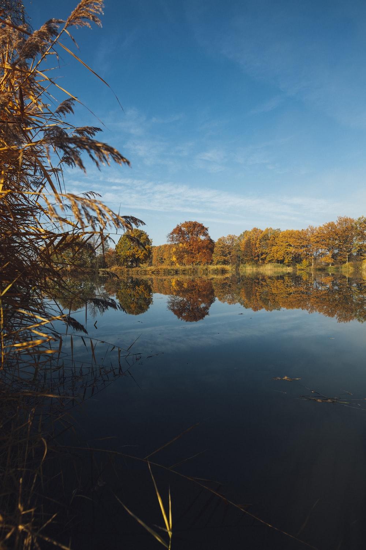 body of water across trees