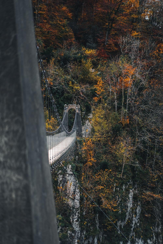 bridge near trees during daytime