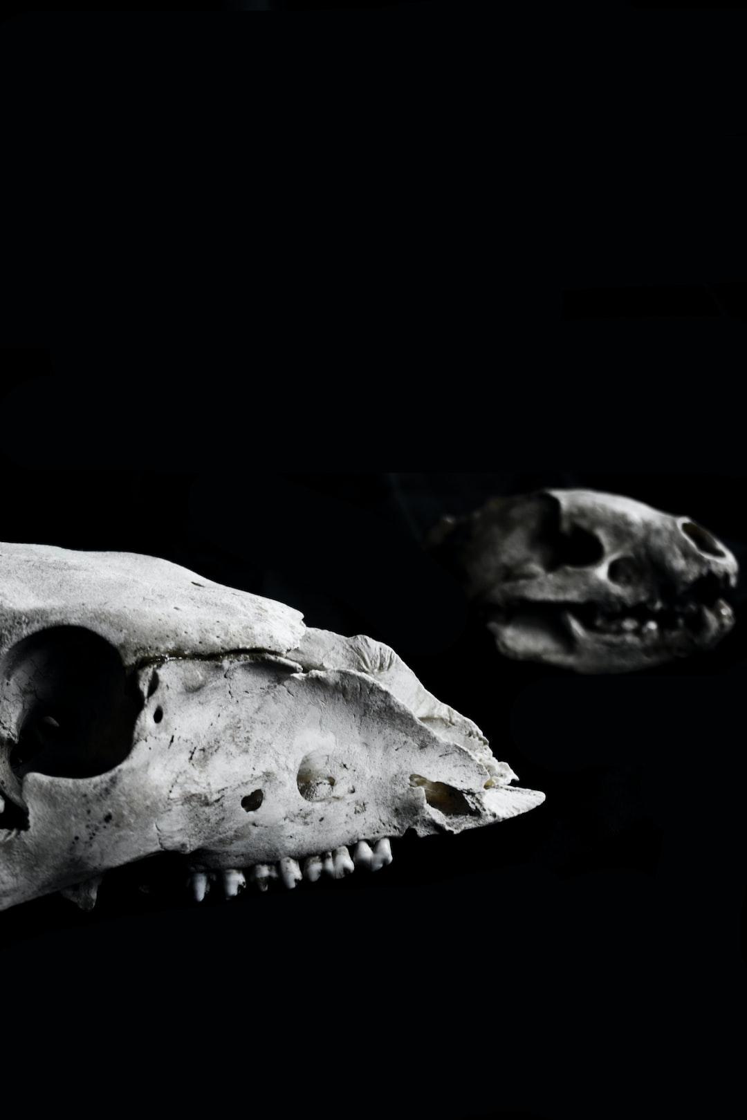 二叠纪末发生的大灭绝原因假说