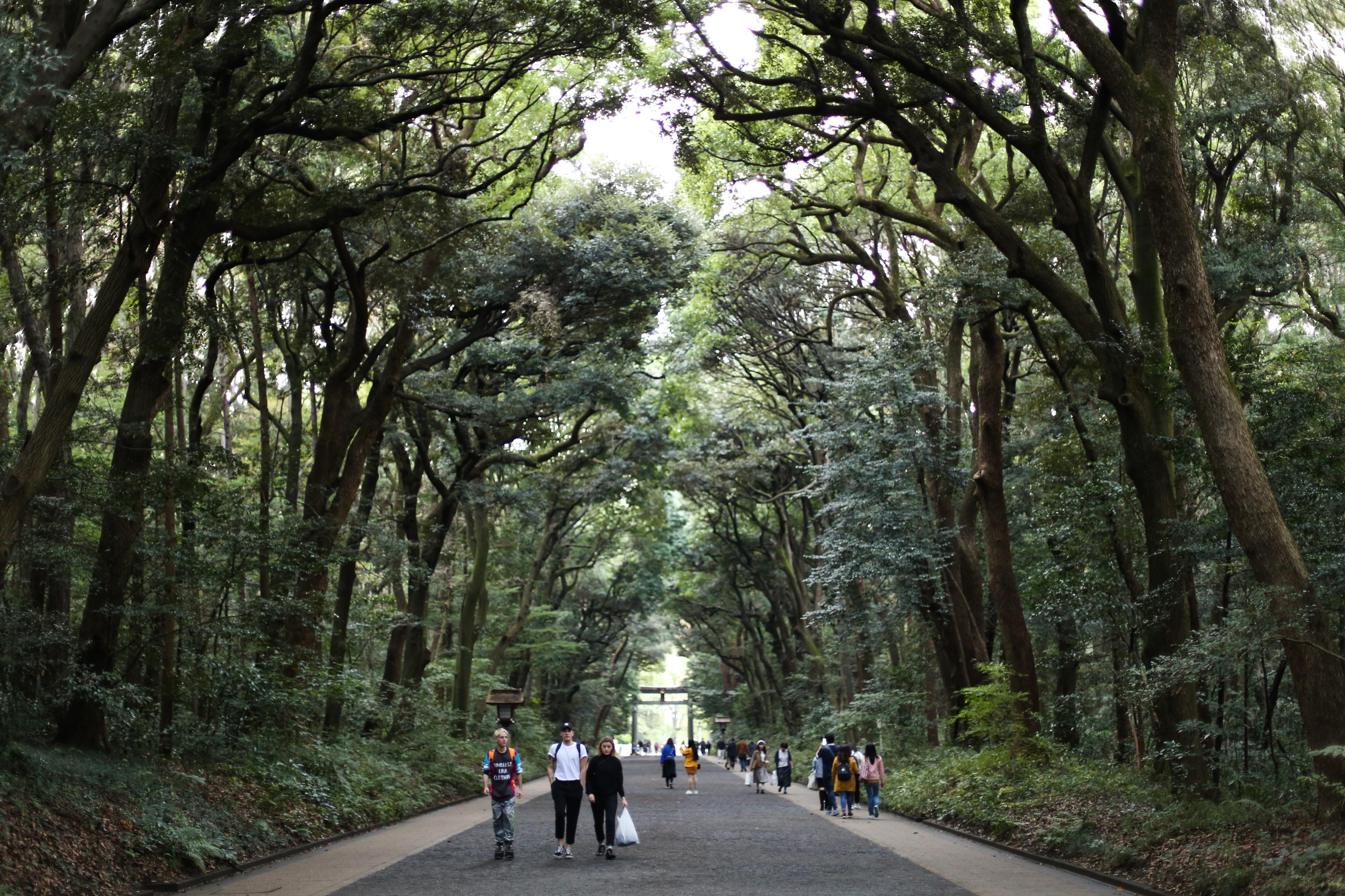 people walking between trees