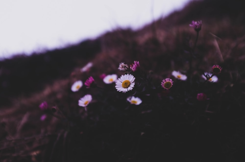 selective focus photography of white and purple flowers