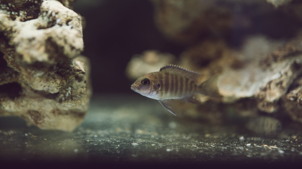 black and brown pet fish in underwater