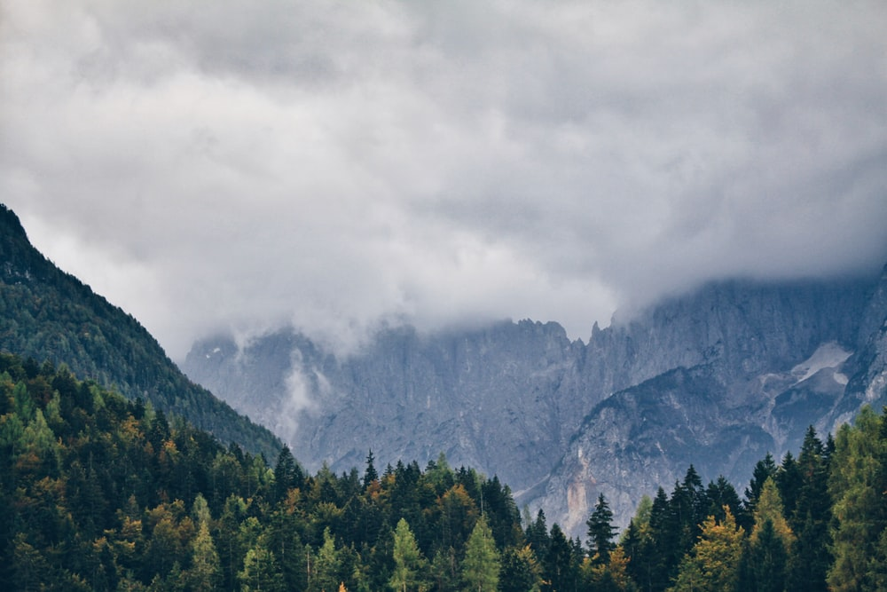 pine trees field under white cloudy sky