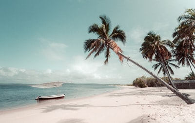 beach beside coconut palm tree tropical teams background