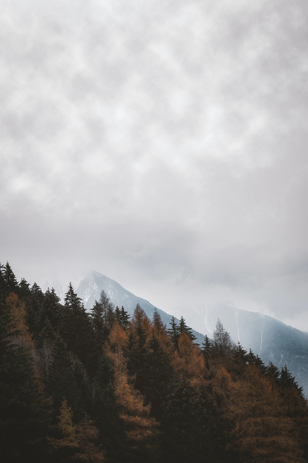 mountain covered with trees