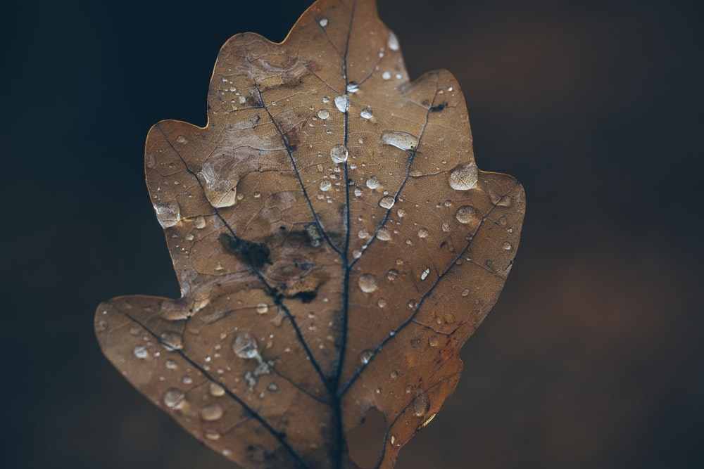 low light photography of brown leaf
