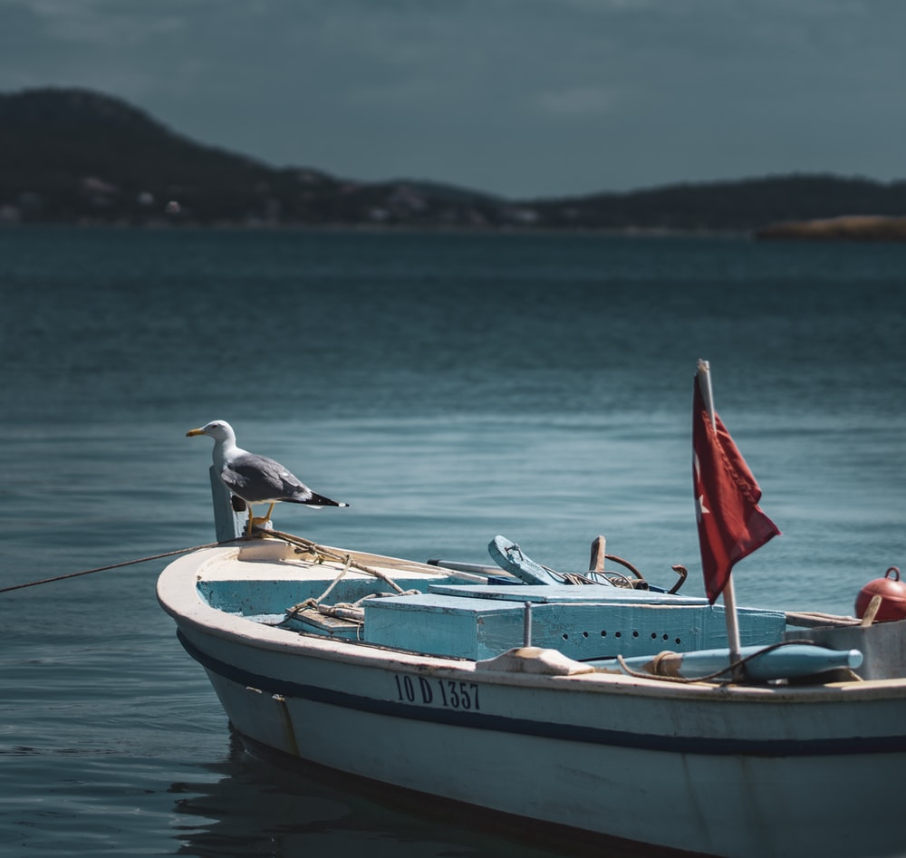 gray and white bird on white boat