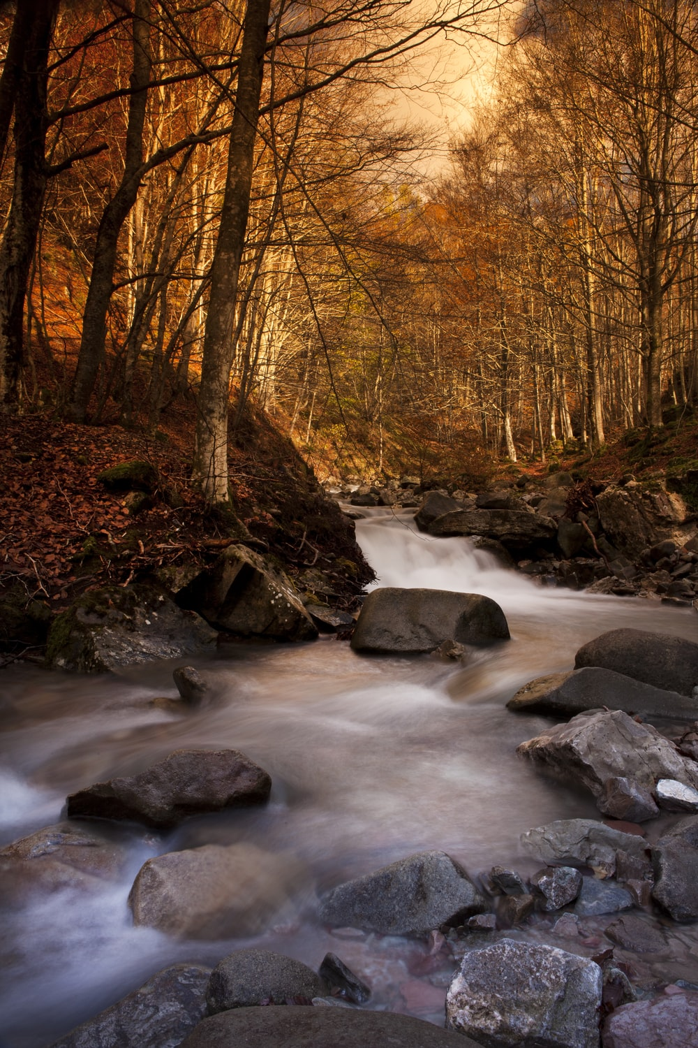 time lapse photography of river in forest