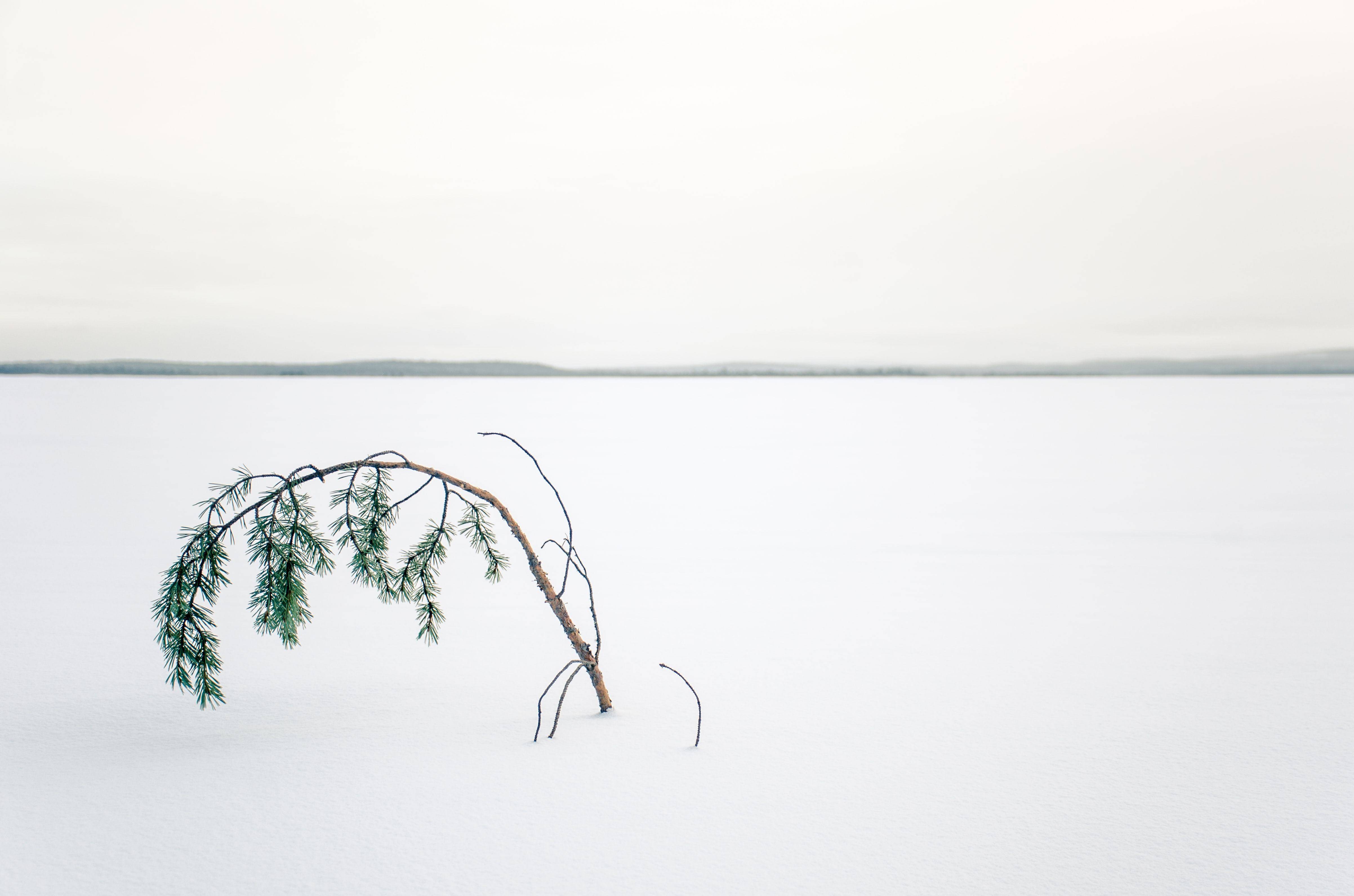 tree in the middle of snow covered land