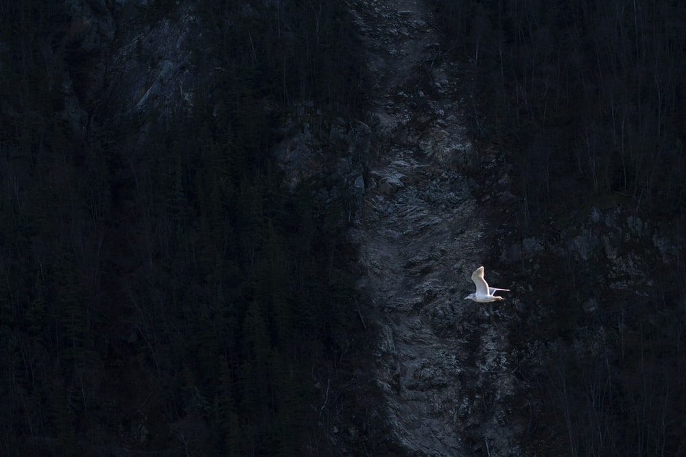 white flying bird