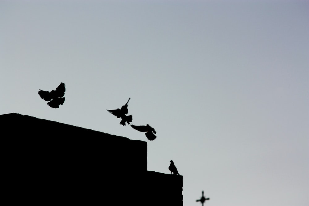 silhouette of birds on rooftop
