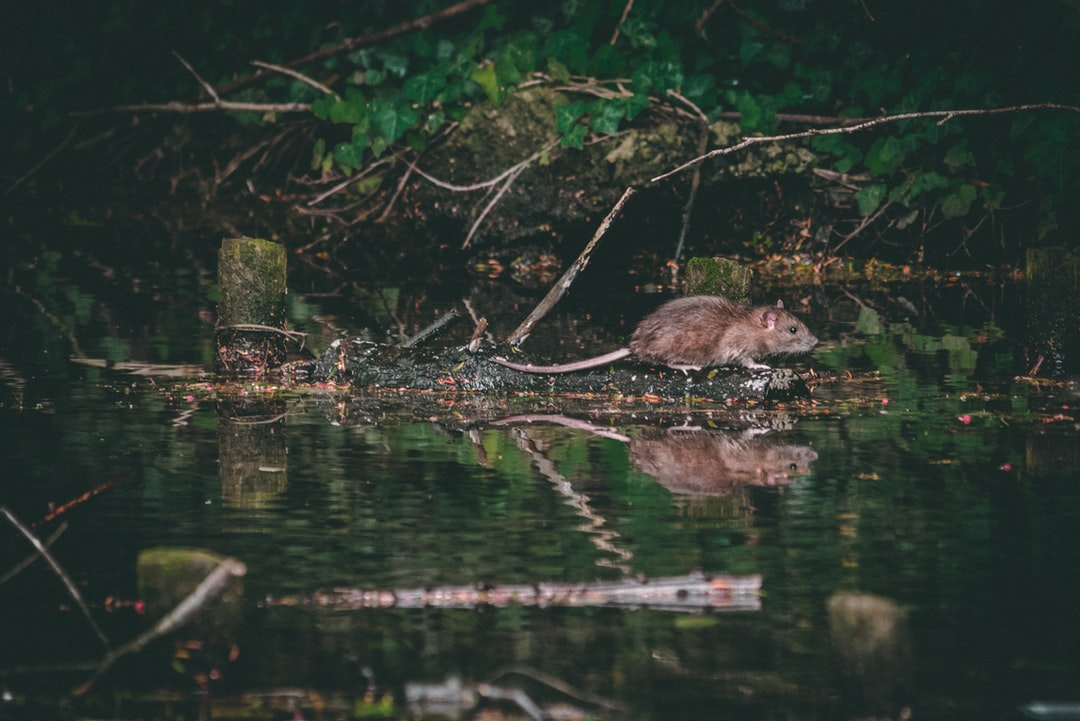Went out for my first walk with my first telephoto lens, managed to come across some water rats, sounds gross, but they were great to shoot! Albeit not very still…