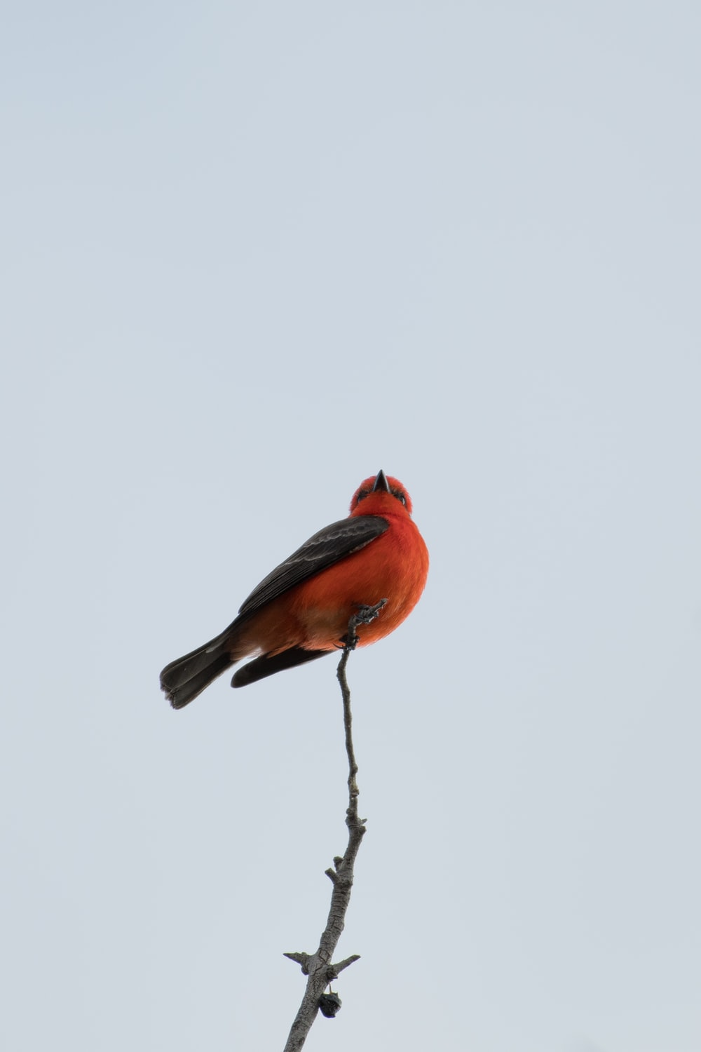 orange and black bird perched on tree branch