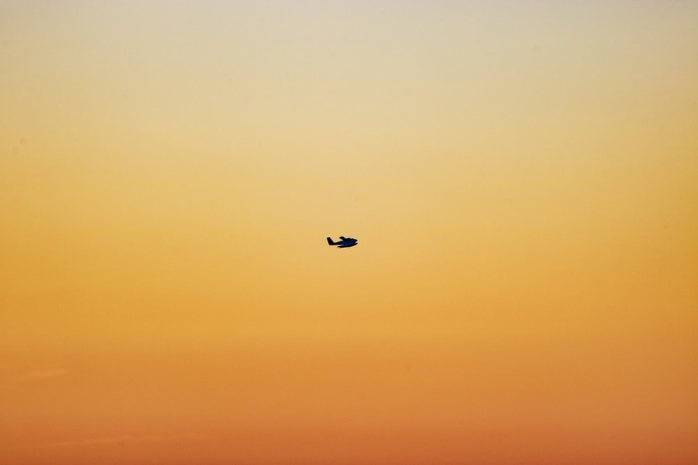 selective focus photography of flying bird during golden hour