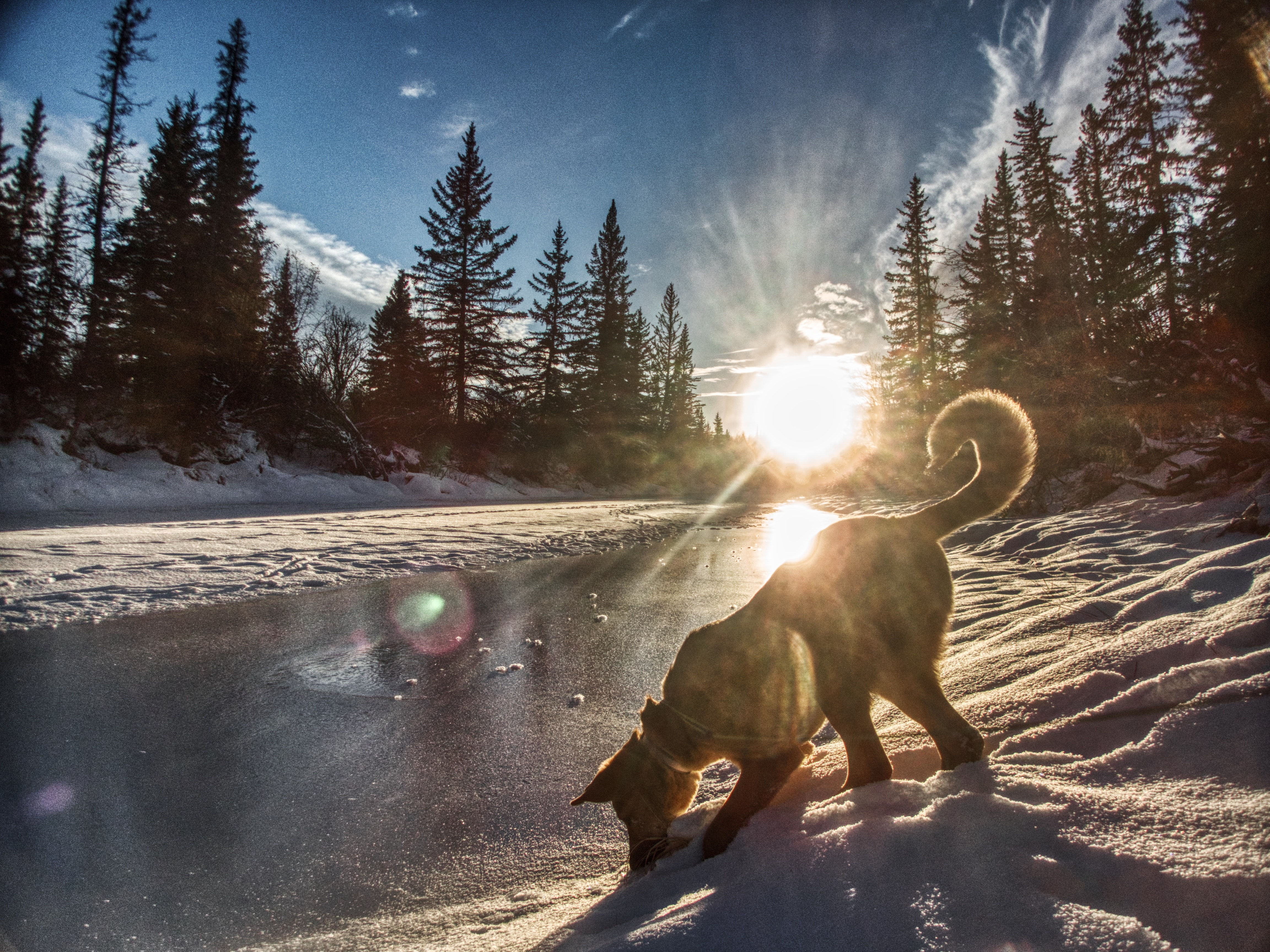 dog on snow-covered field