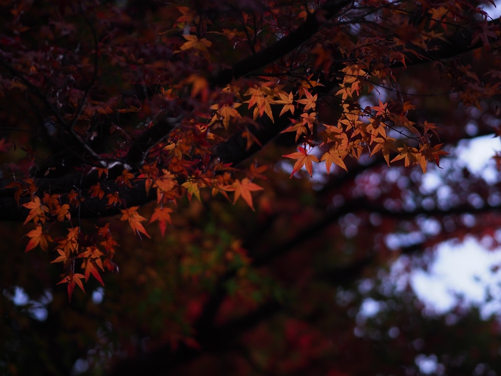 selective focus photography of brown trees