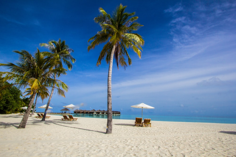coconut trees on shore