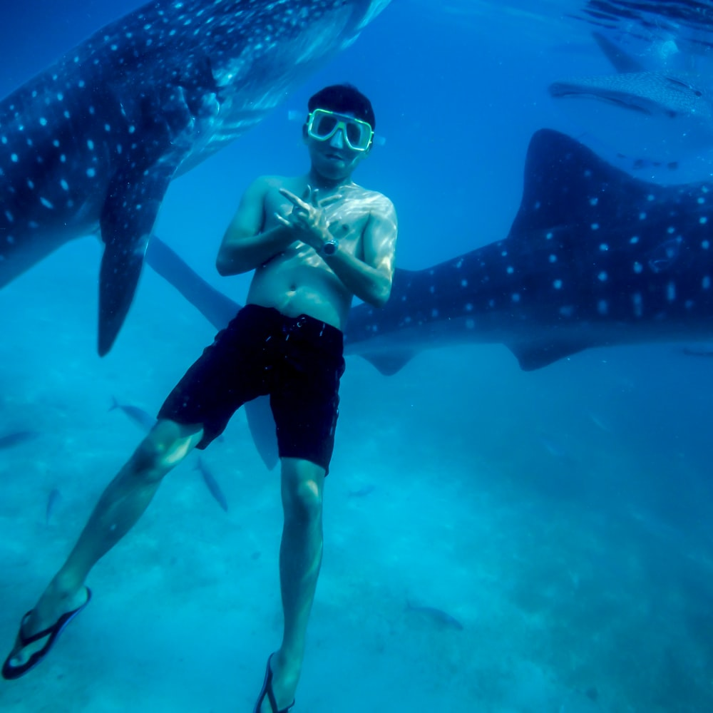underwater photography of man wearing black shorts with two black whale sharks