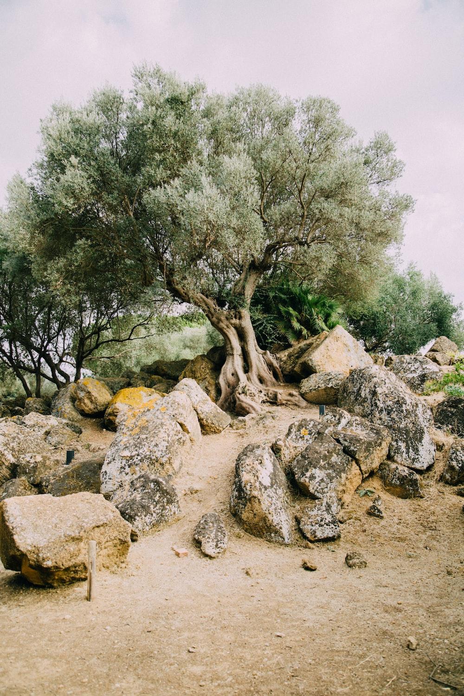 gray rocks across tree
