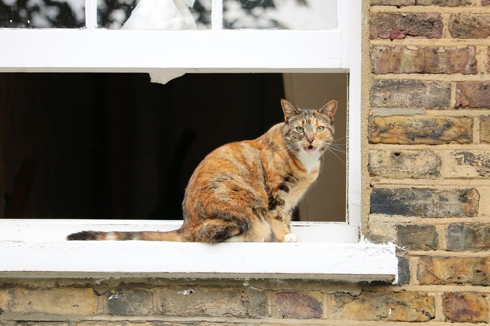 orange tabby cat on window sill