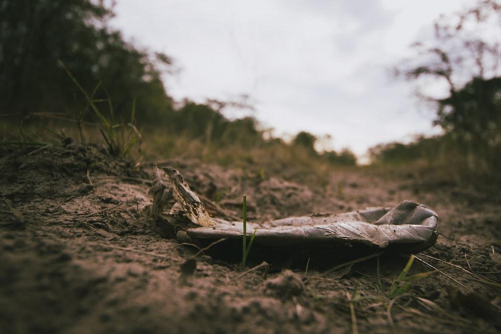 brown leaf on ground