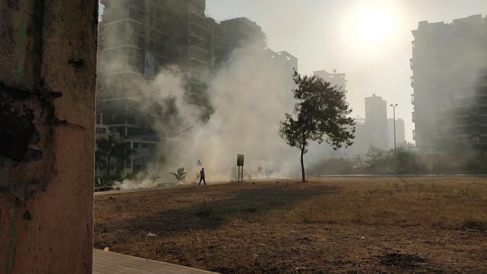 green tree across smokes