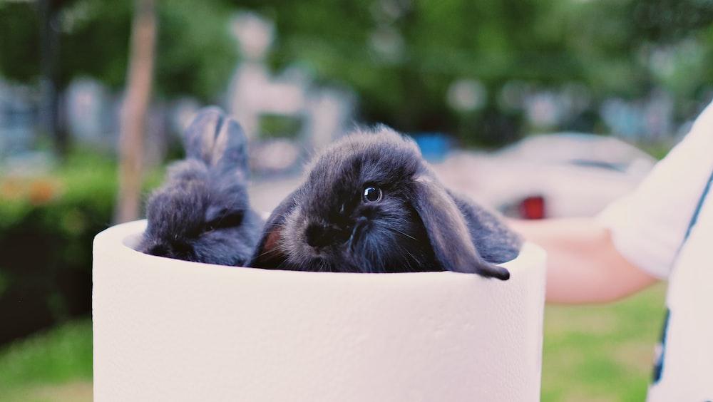 two black rabbits