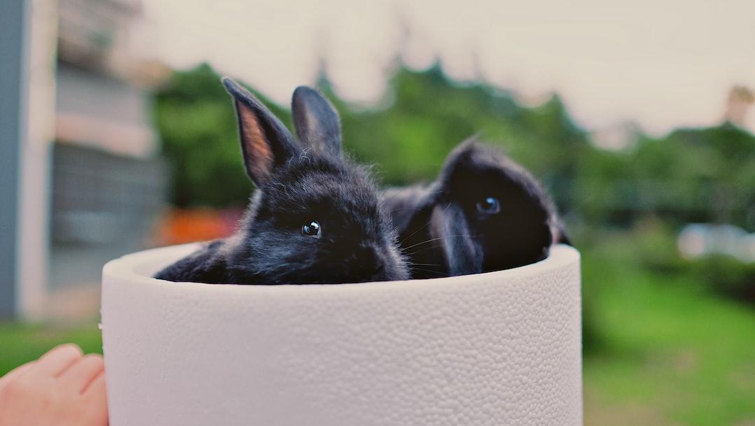 Yuanyuan's rabbit