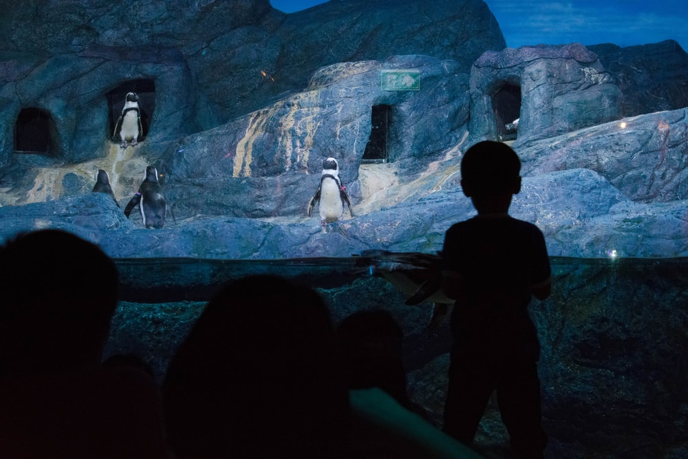 A boy looking penguin show in Sealife    | HD photo by