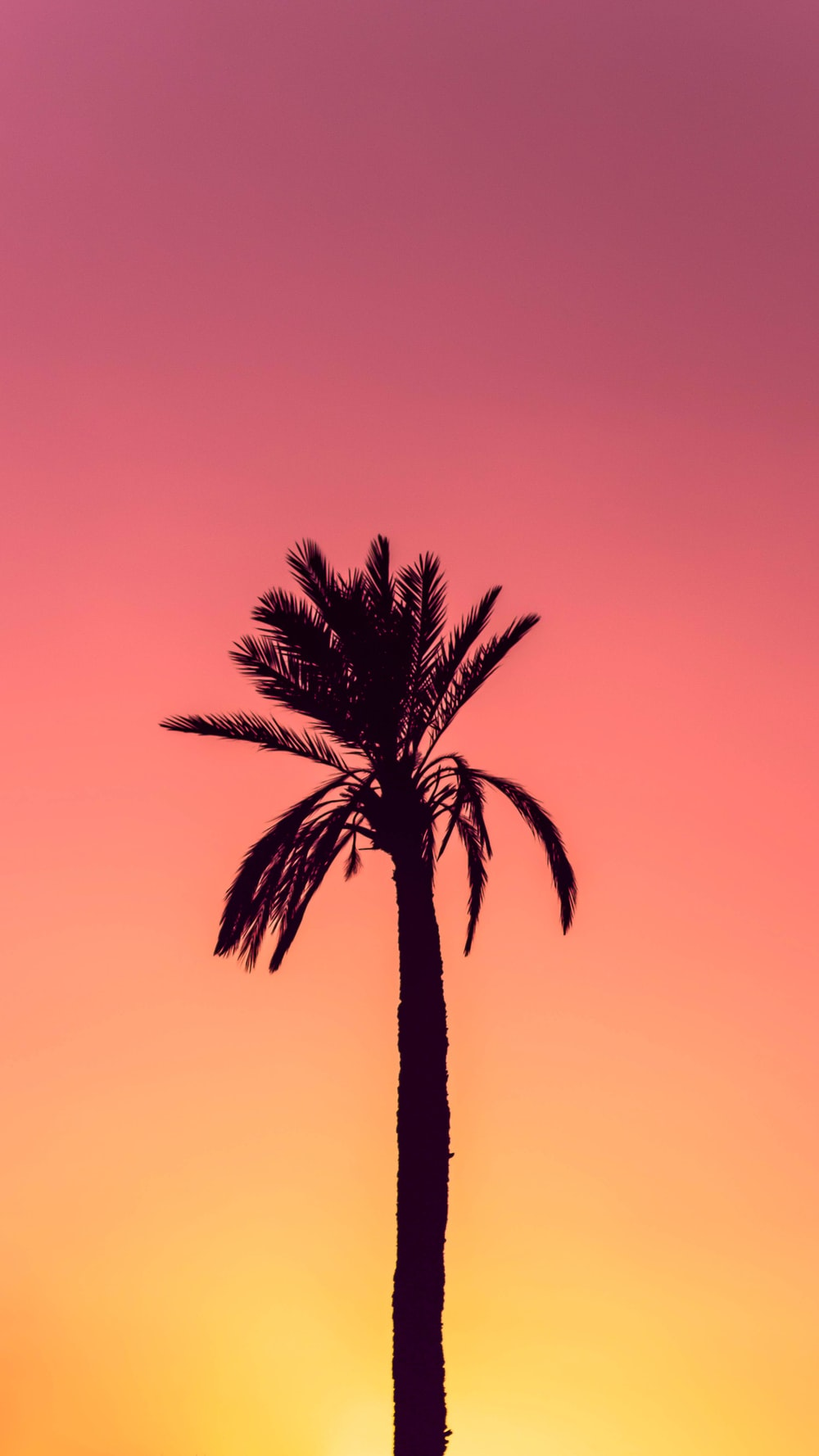 silhouette photography of palm tree