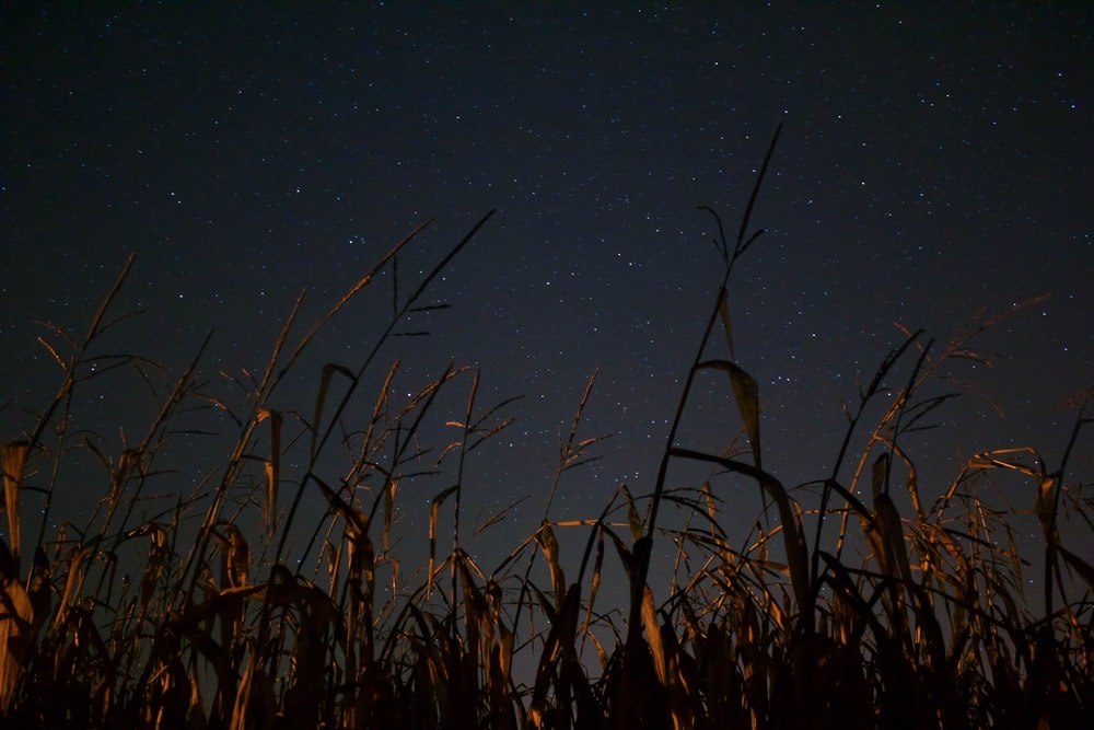 brown grass during night time