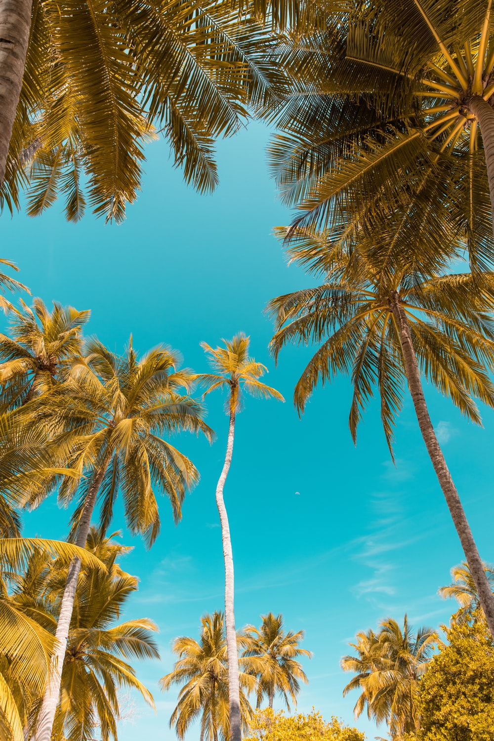 low-angle photo of coconut trees