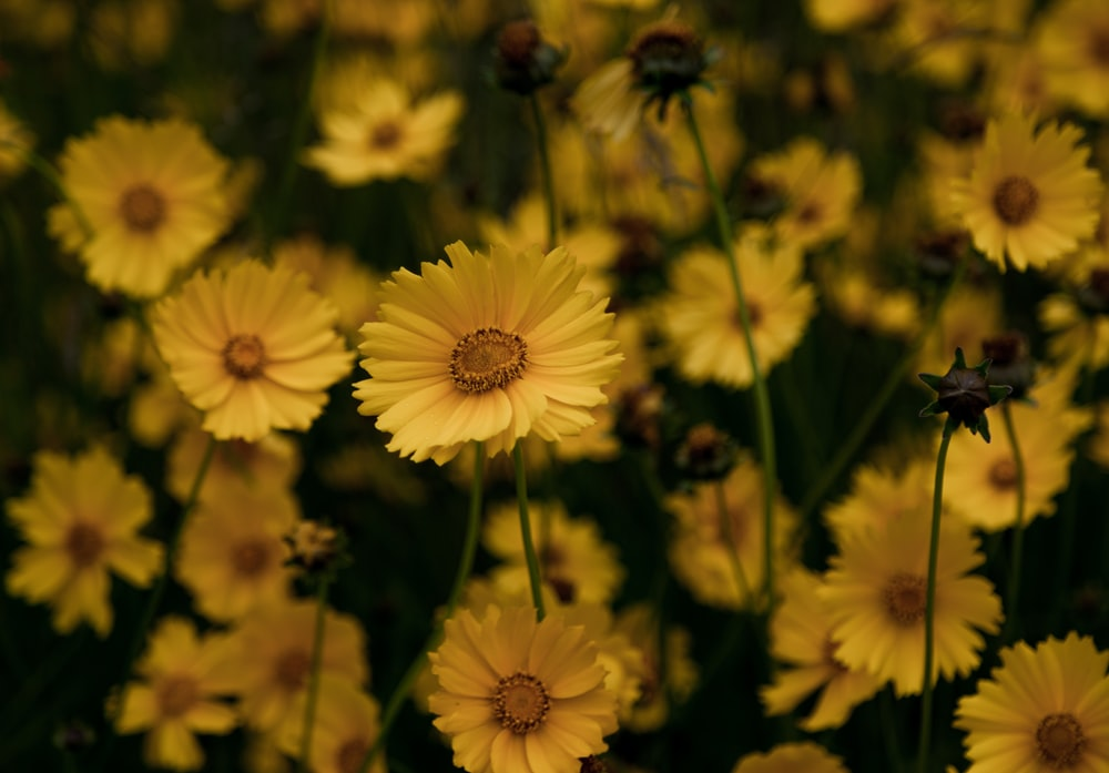 yellow-petaled flowers