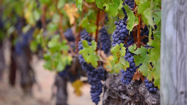 Vinoteca ALDI, qualità e convenienza dei vini regionali