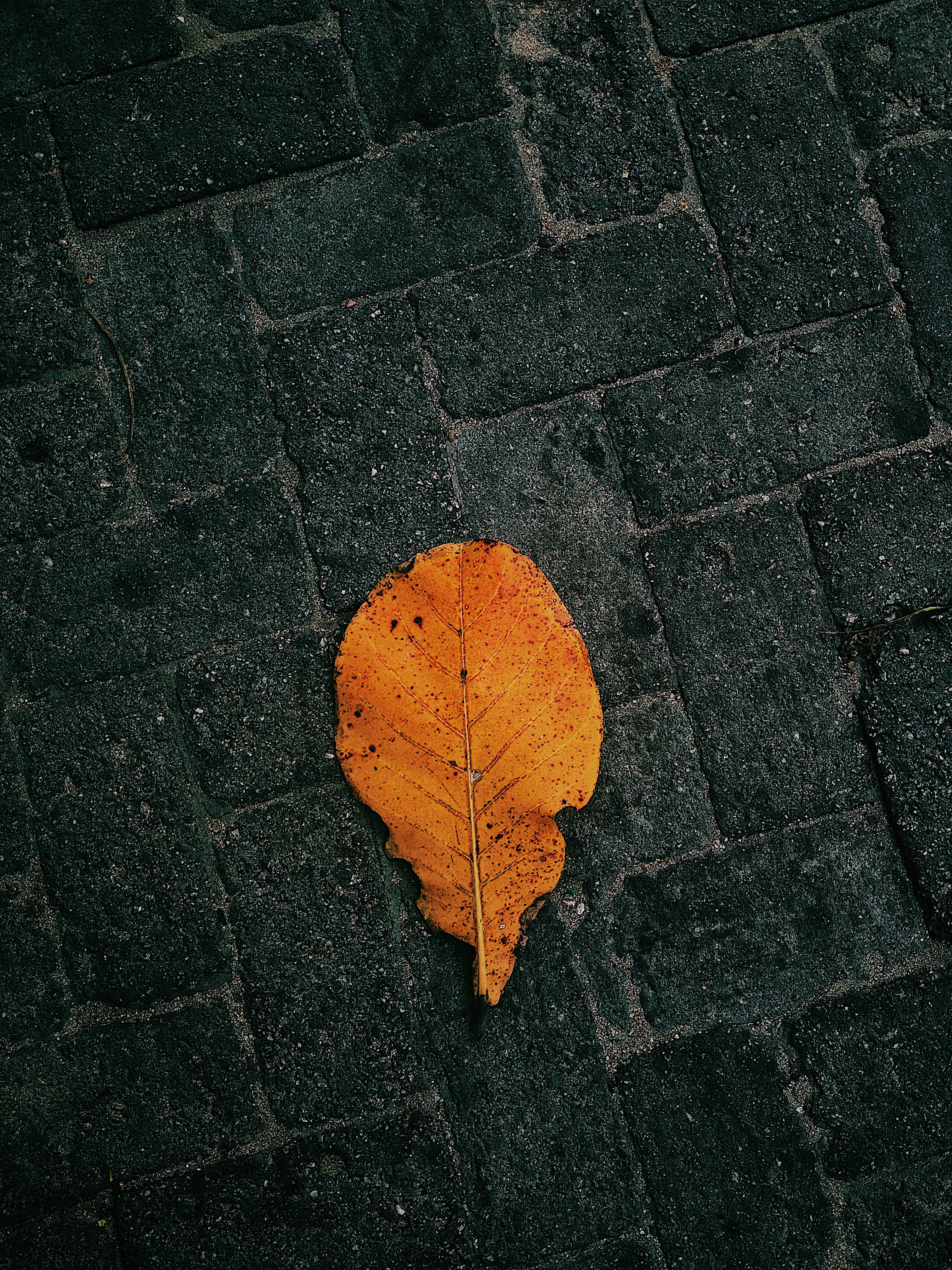 Brown Leaf On Pavement