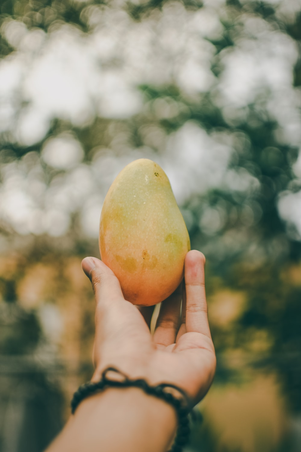 person holding ripe mango