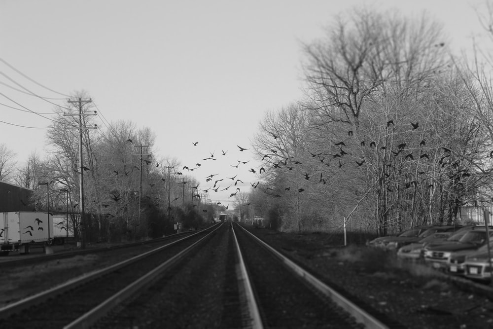 grayscale photography of flock of flying birds