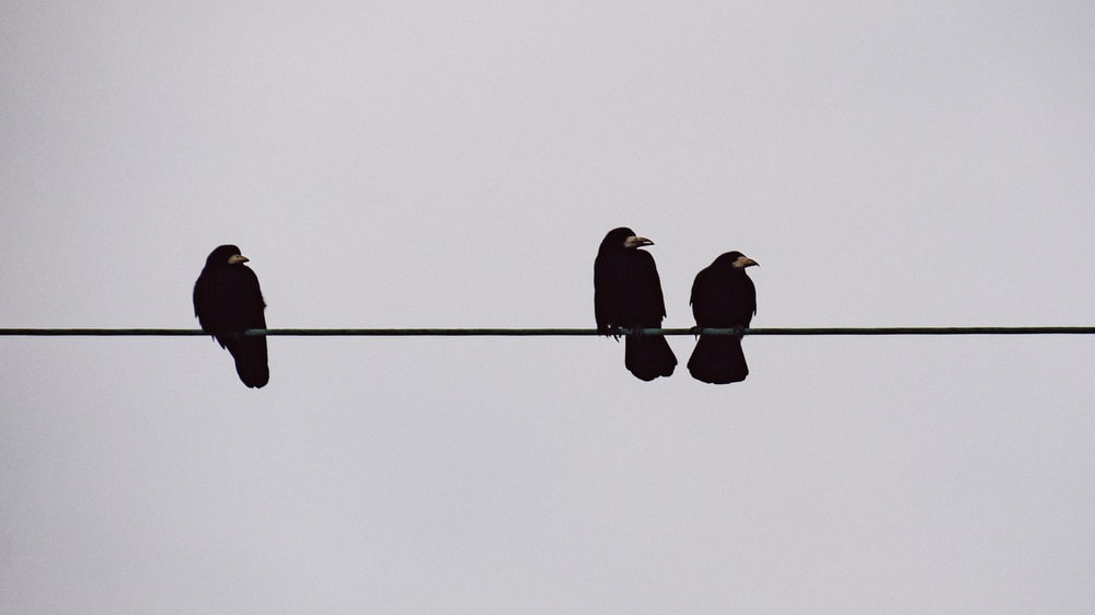 three birds pearching on string