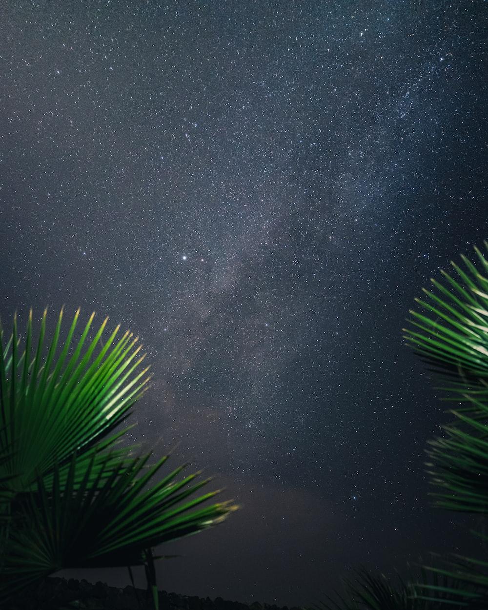green leaf tree under black sky during nighttime